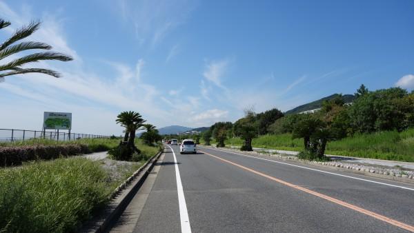 棕櫚の木が等間隔に植わる国道28号。車道も路側帯も広くサイクリングにはもっていこ。