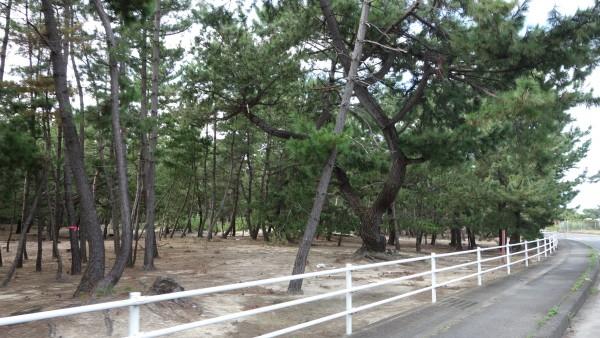 日本の渚百選・日本の水浴場55選にも選ばれた慶野(けいの)松原です。