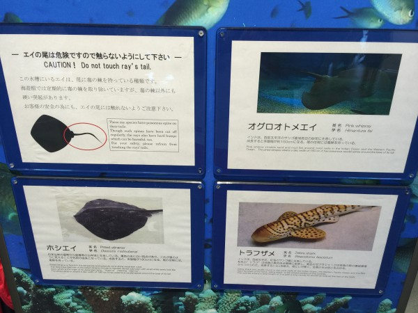 サメとエイのタッチプール(モルディブ諸島ゾーン)の諸注意