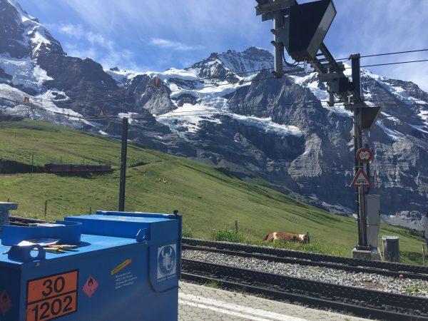 晴れれば天国、曇れば地獄のKleine Scheidegg駅。牛さんも駅周辺をうろうろ。