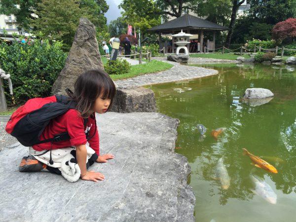 3年前から娘のお気に入りなのが【友好の庭】の鯉。自分の方によって来る!と大はしゃぎ。